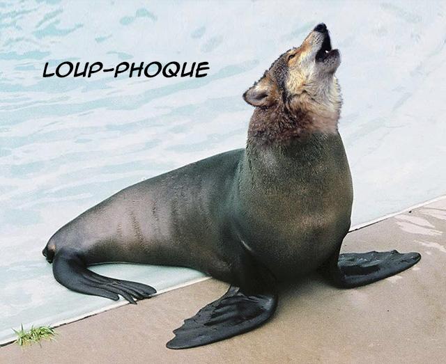 LoupPhoque